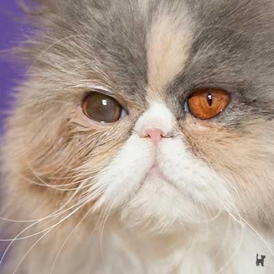 Katze Janis hat aufgrund der Augentropfen unterschiedlich große Pupillen