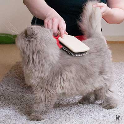 Katze am Rücken bürsten