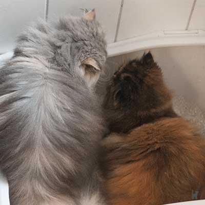 Katzen auf der Toilette