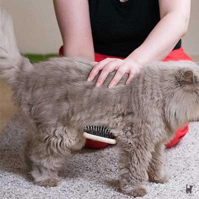 Katze am Bauch bürsten