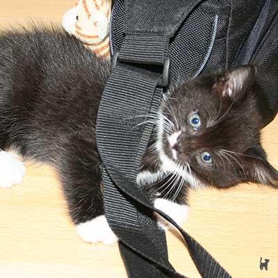 Kitten spielt an Kameratasche