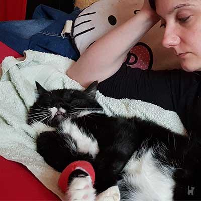 Kranke Katze mit Verband um Vorderpfote