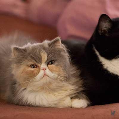 Kuschelnde Katzen