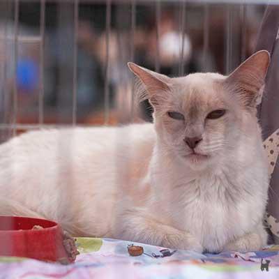Katze im Ausstellungskäfig