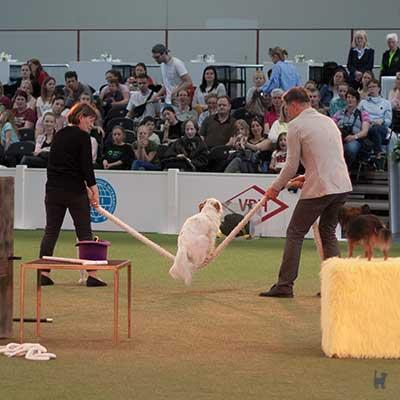 Hund springt Seil