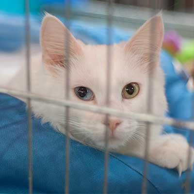 Weiße Katze mit zwei verschiedenfarbigen Augen