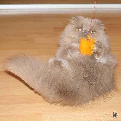 Kitten spielt mit Katzenangel