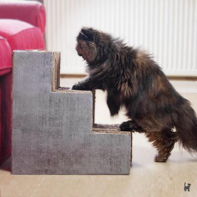 Die selbstgebaute Katzentreppe hilft Lara beim Aufstieg aufs Sofa