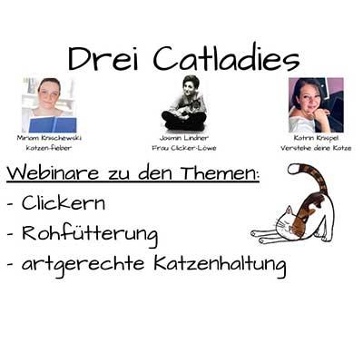 Unser Catlady Webinar-Projekt