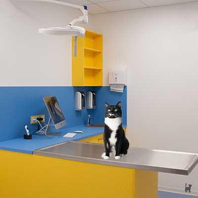 Eine gute Versorgung durch den Tierarzt ist wichtig!