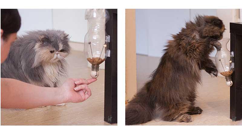 Katzen am Leckerchenspender