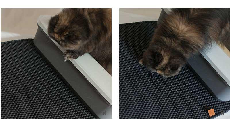 Katze auf Katzenstreumatte