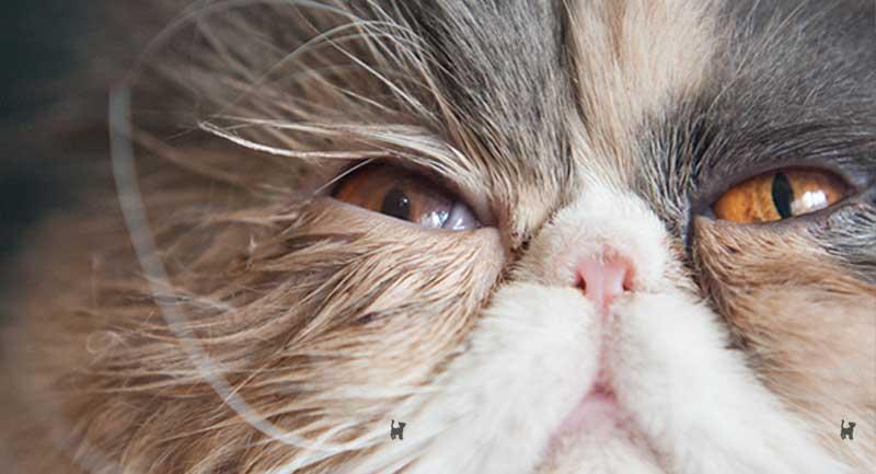 Katze mit operiertem Auge