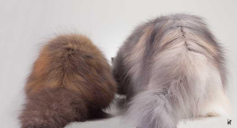 Größenvergleich Kitten und erwachsene Katze