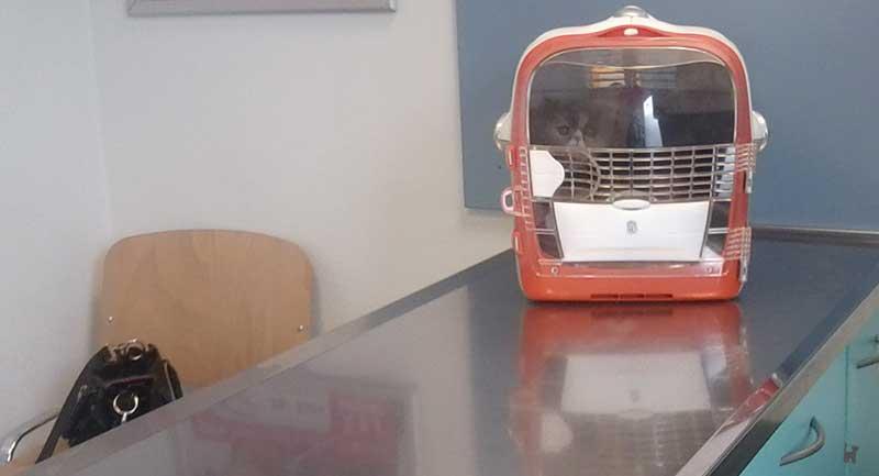 Katze auf dem Untersuchungstisch beim Tierarzt