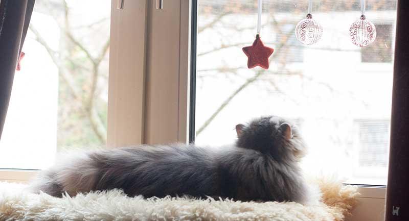 Katze schaut sich Fensterdeko genauer an