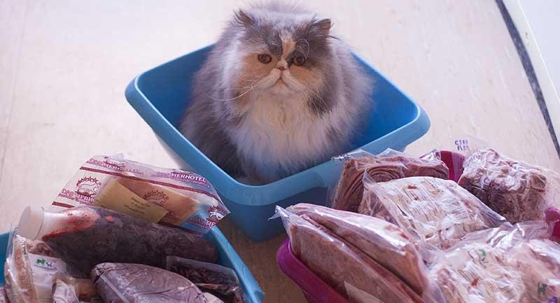 Katze sitzt in Plastikschüssel