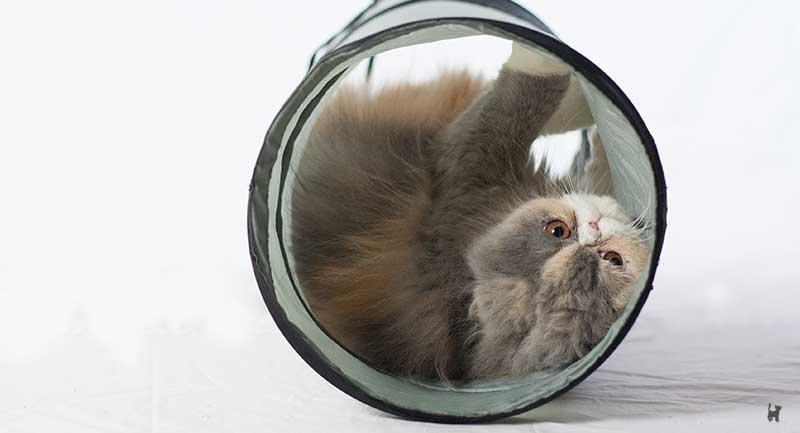 Kitten rollt sich in Rascheltunnel umher