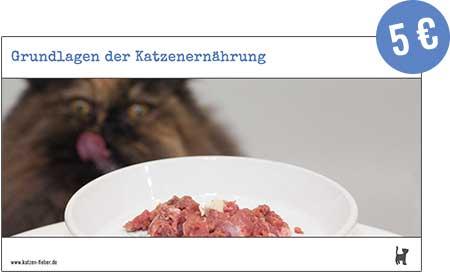 "Screenshot Webinar ""Grundlagen der Katzenernährung"""