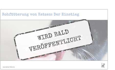 """Screenshot Webinar """"Rohfütterung von Katzen: Der Einstieg"""""""
