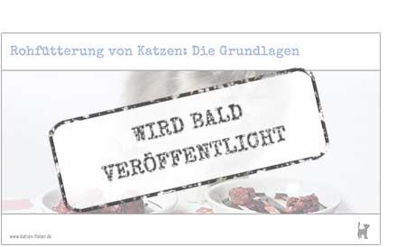 """Screenshot Webinar """"Rohfütterung von Katzen: Die Grundlagen"""""""