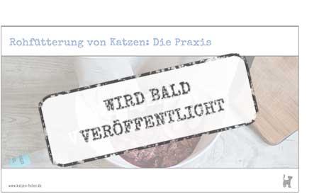 """Screenshot Webinar """"Rohfütterung von Katzen: Die Praxis"""""""