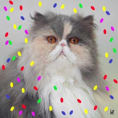 Die Katze mit der Gesichtskirmes wird heute sechs Jahre alt