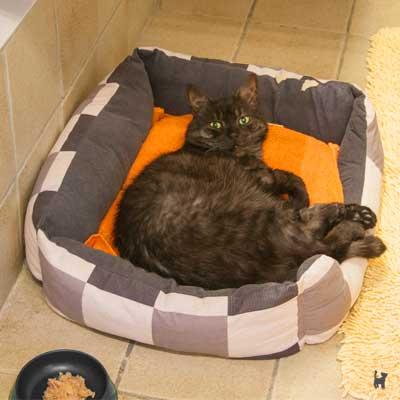 Auch die Katzen im Tierheim GE sollen es gemütlich haben ;)
