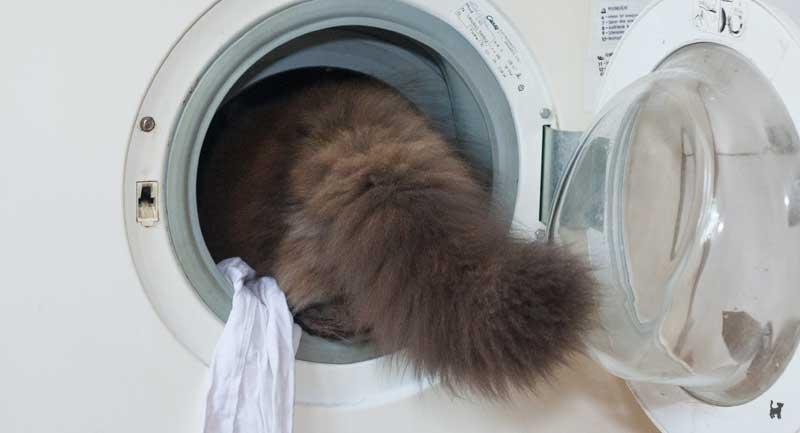 Katze klettert in Waschmaschine