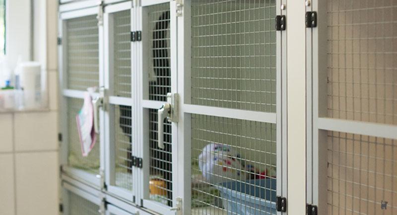 Katze im Inneren einer Metallbox