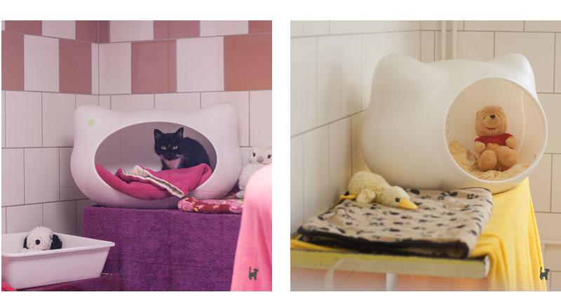 Katzenzimmer in pink und gelb