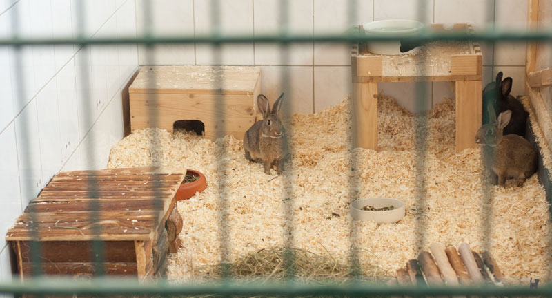 Kaninchen im Kleintiergehege