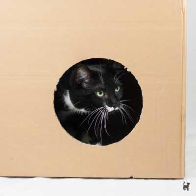 Ein Karton kann unsicheren Katzen als sicherer Rückzugsort dienen