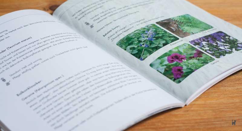 Einblick ins Buch: Farbfotos und Grafiken auf Seite 42 & 43