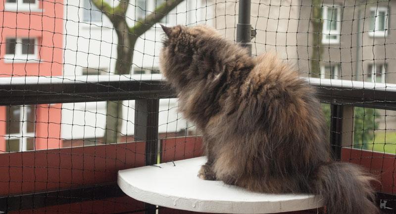 Katze sitzt auf abgesichertem Balkon