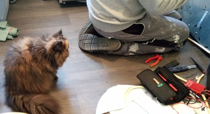 Katze beobachtet Handwerker