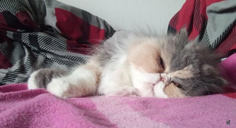 Katze döst im Bett