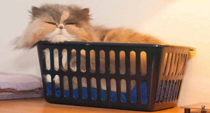 Katze in Plastikkorb