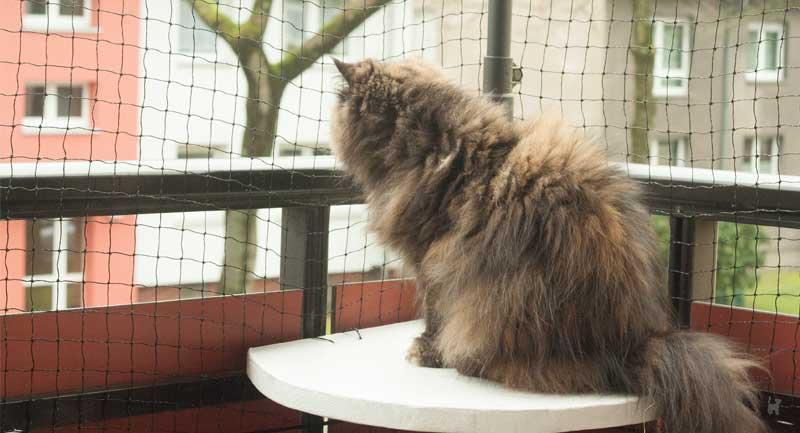 Katze sitzt auf Balkon