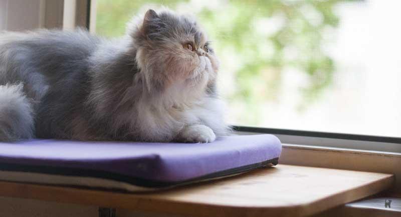 Katze auf Fensterliege