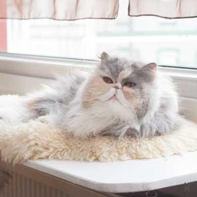 Janis liebt es, auf der Fensterbankliege zu liegen