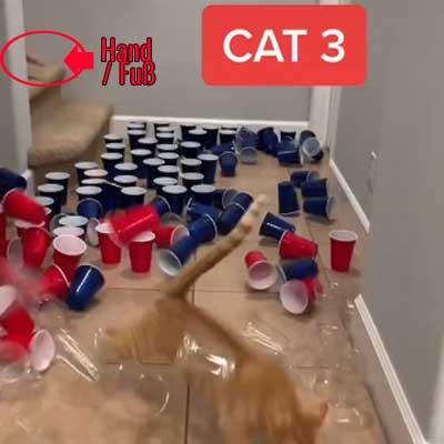 Der Screenshot des Videos zeigt eine Hand, die auf der Treppe hinter der Katze platziert ist