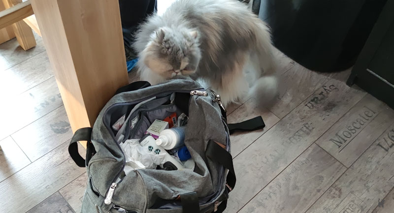 Katze riecht an der Tierarzttasche