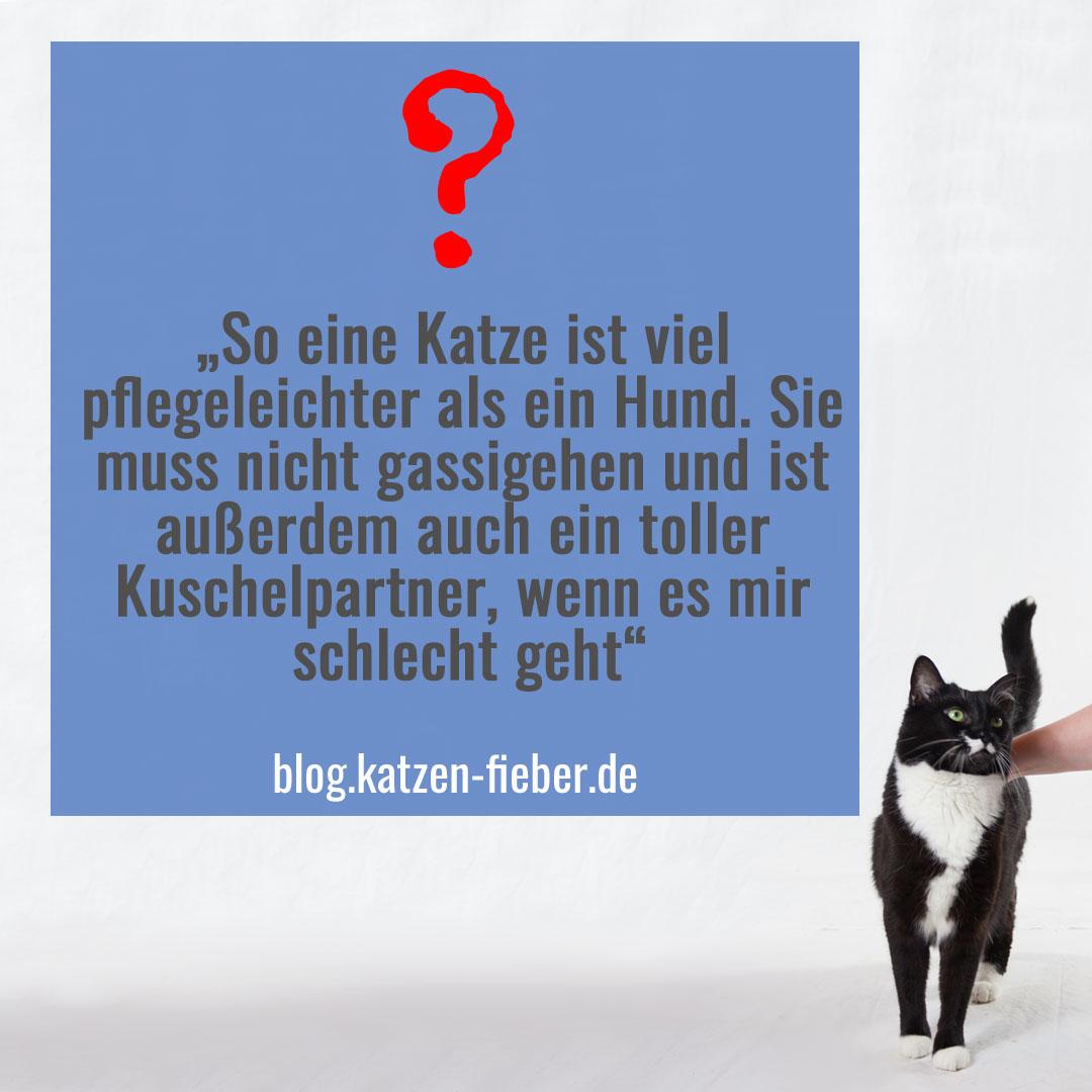 Die Katze ist nicht pflegeleichter als ein Hund - wird jedoch oft fälschlicherweise dafür gehalten